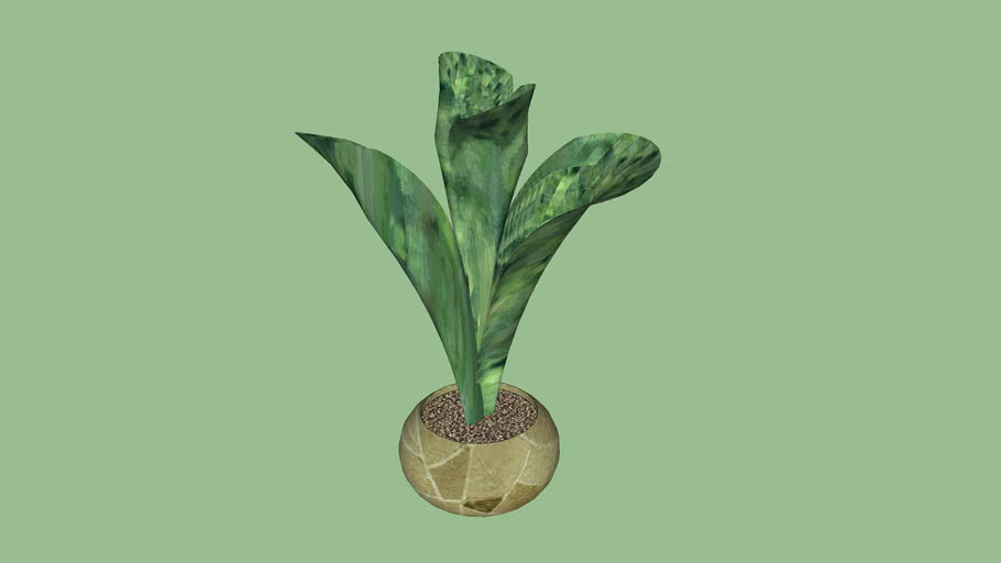 rostlina