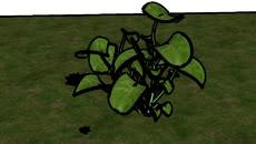 FLOWER AND GRASS