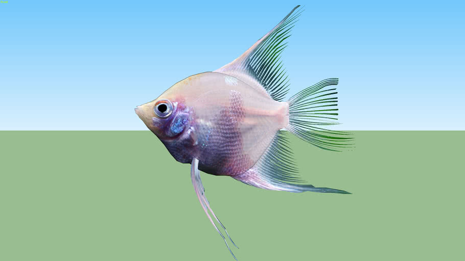 Tropical fish  熱帯魚