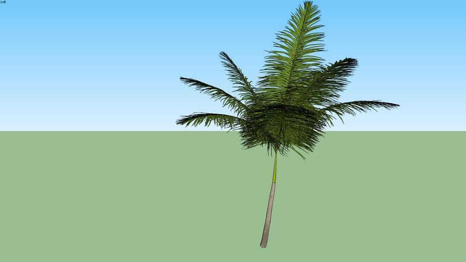 Palmeira 16