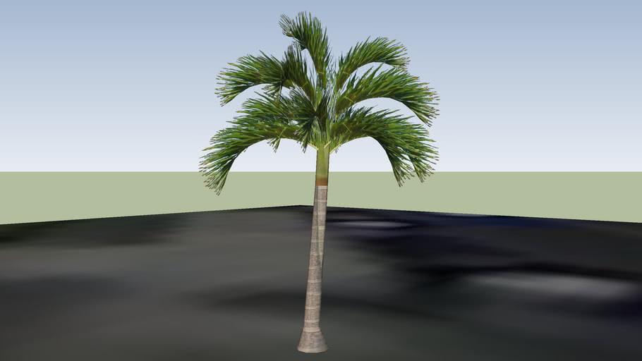 Small palm tree - 733 Anacapa St