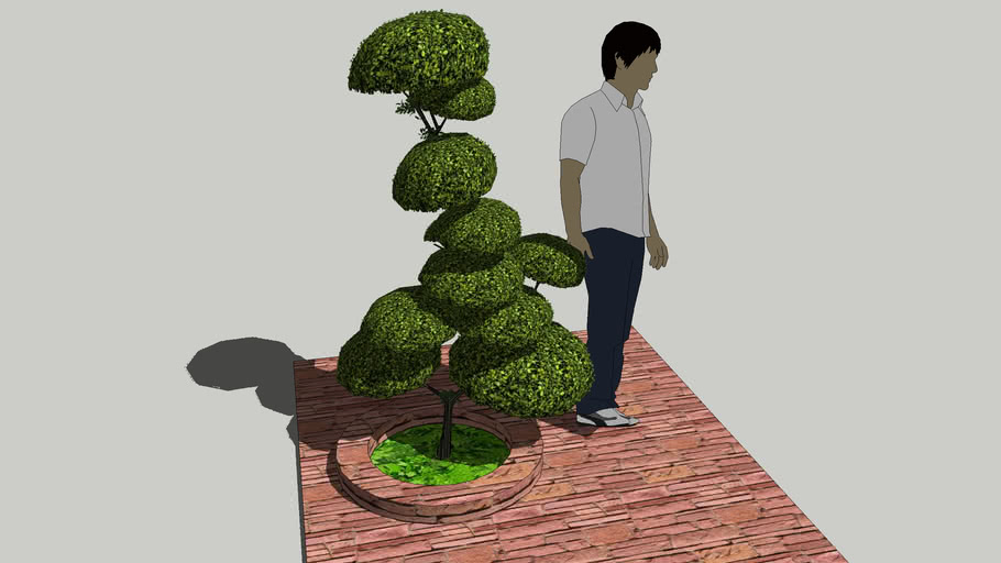 BOSSO ,  Buxus sempervirens   - LOW POLY