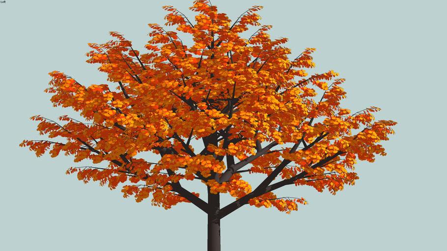 big+tree+fall