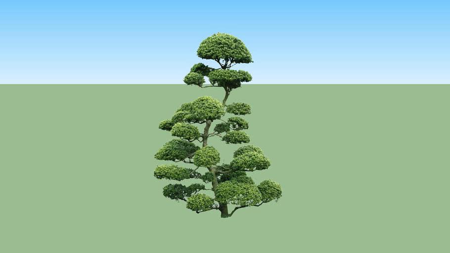 Pohon Eksotik Taman