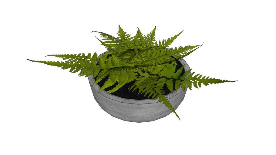 Decorative plant / Tree object