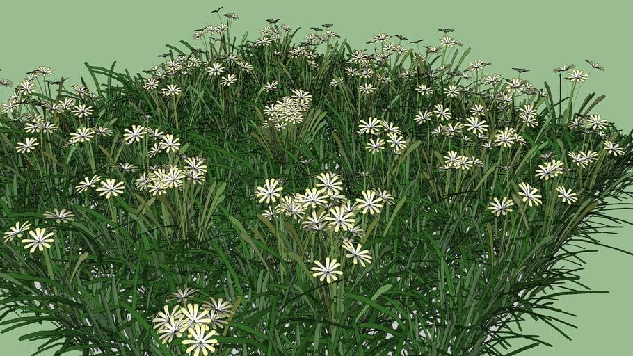 Grass & Meadow