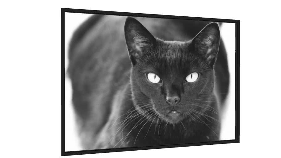 Quadro Cat4 - Galeria9, por André Trigueiro