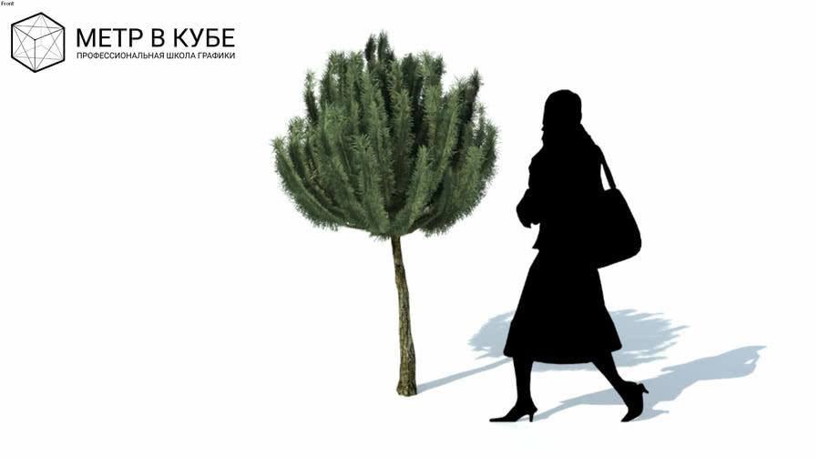 Low poly 3d tree pine bush (049)