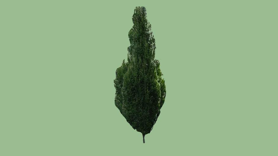 Small tree - 05