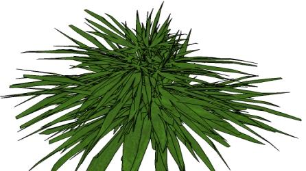botanique : arbres - fleurs - plantes - botanical : tree - flower plant