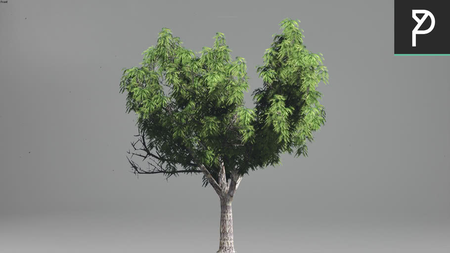 2DTrees_035 | Leaf Medium