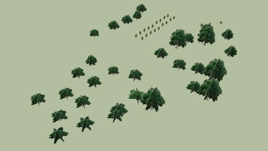 鳳仙寺木樹2 桐生