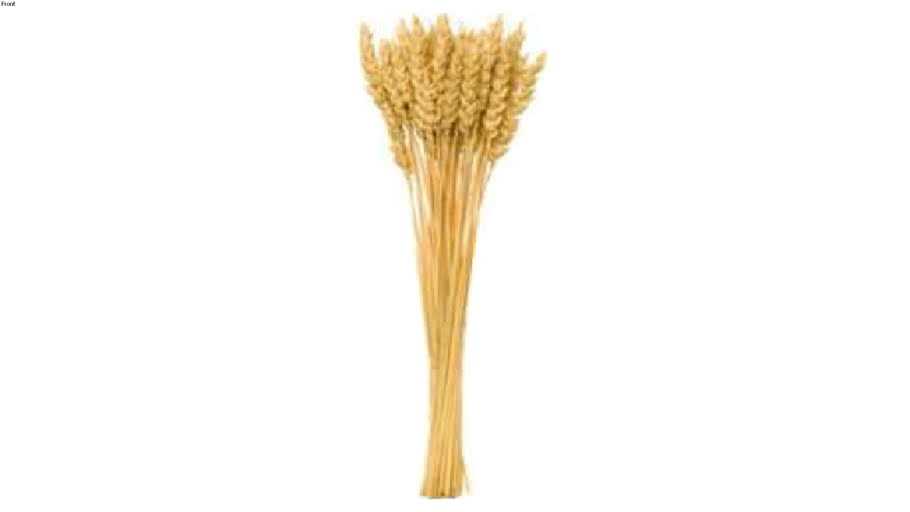 Wheat 2d