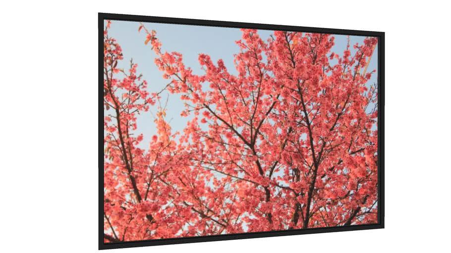 Quadro Sakura - Galeria9, por A.J.