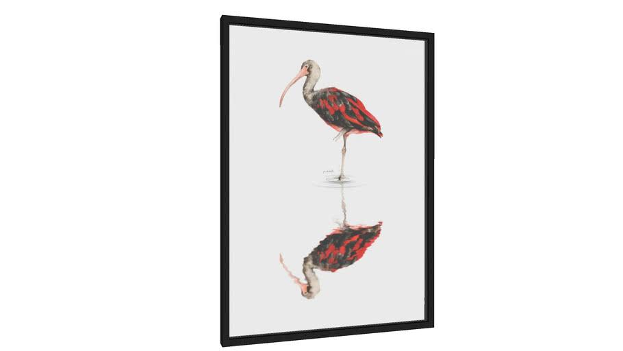 Quadro Scarlet Ibis II - Galeria9, por Marcela Picinin