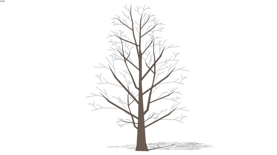 2D winter tree 35'