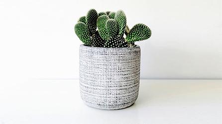 Table plants
