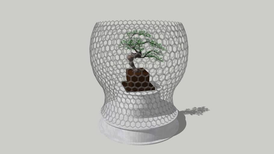 Bonsai Cemara Udang milenial