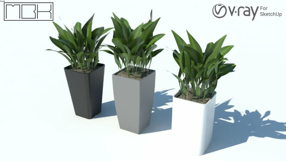 House plant 10