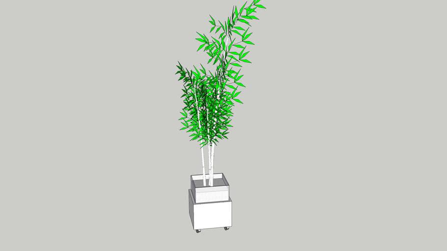 bambu cachepot