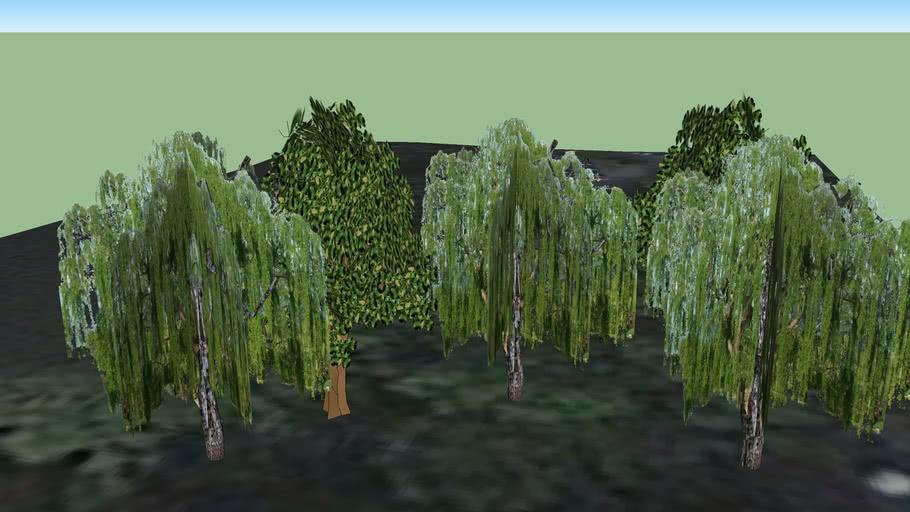 Bäume an der Saaleaue Jena