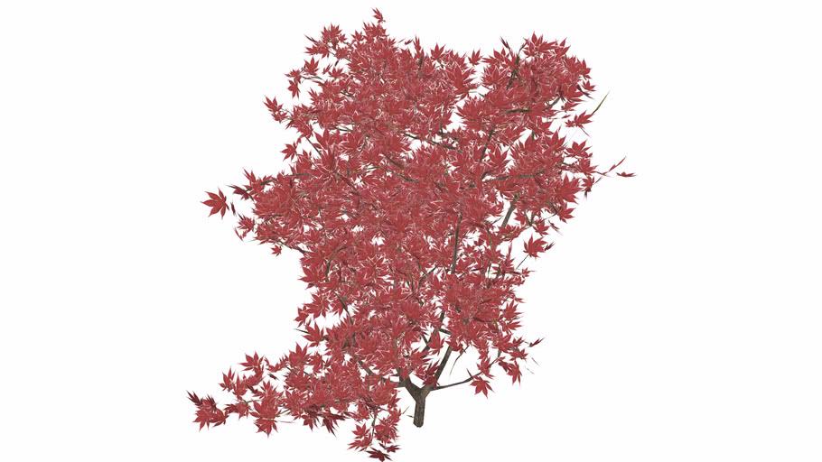 ornamental shrubs