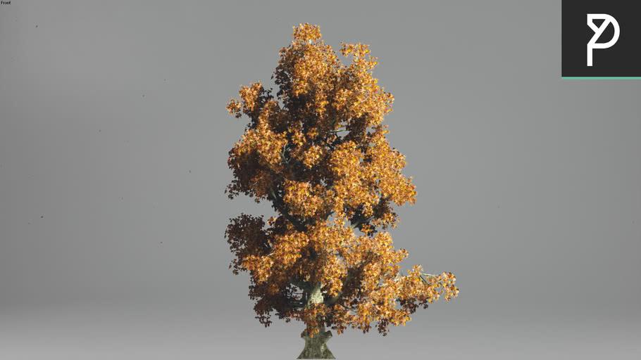 2DTrees_007 | Leaf Medium
