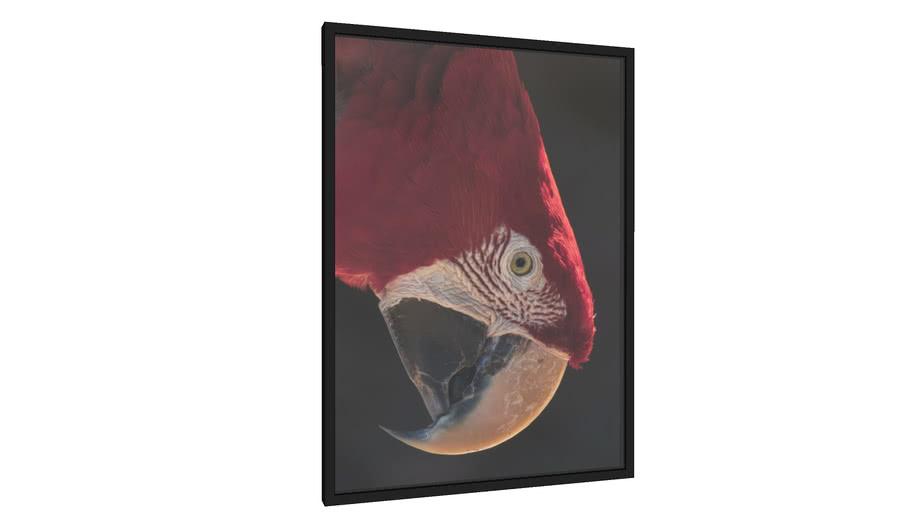 Quadro A beleza da Arara vermelha no Paraná - Galeria9, por Daniel Lima
