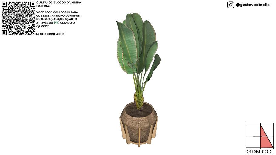 VEGETAÇÃO, PLANTA, COQUEIRO, PALMEIRA II