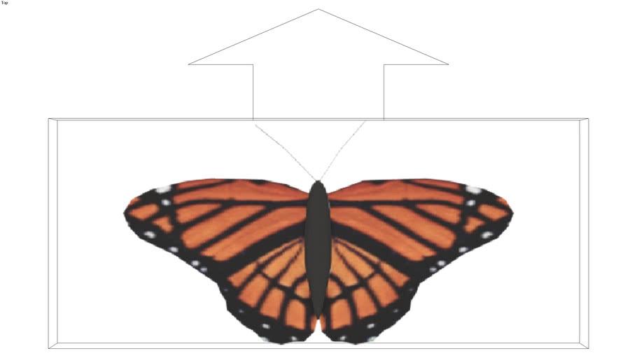 ROCKIT3D   Animal 0010 butterfly 2