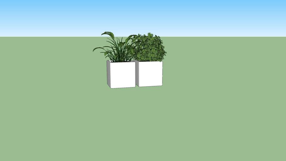 Horta em vasinhos