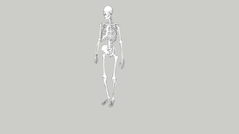 Skelet PrO VSO