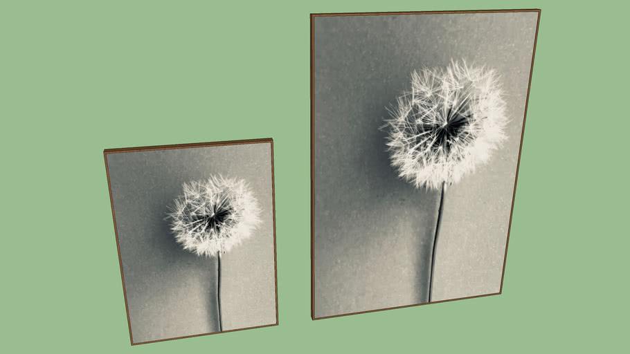 Fiore delicato