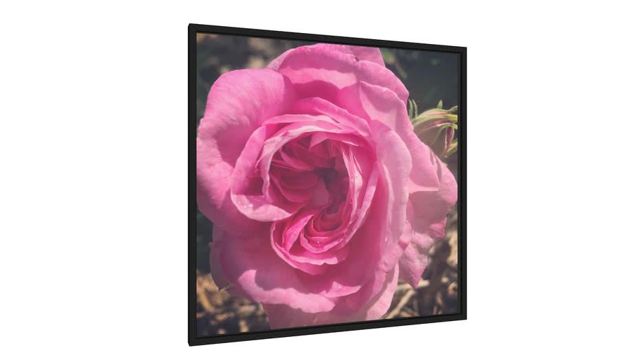 Quadro Rosa - Galeria9, por MAR