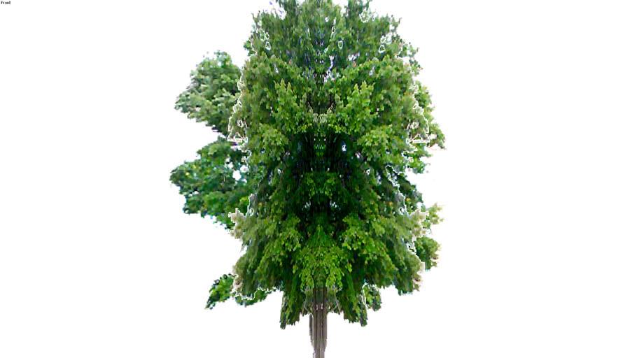 3rd Angle Trees