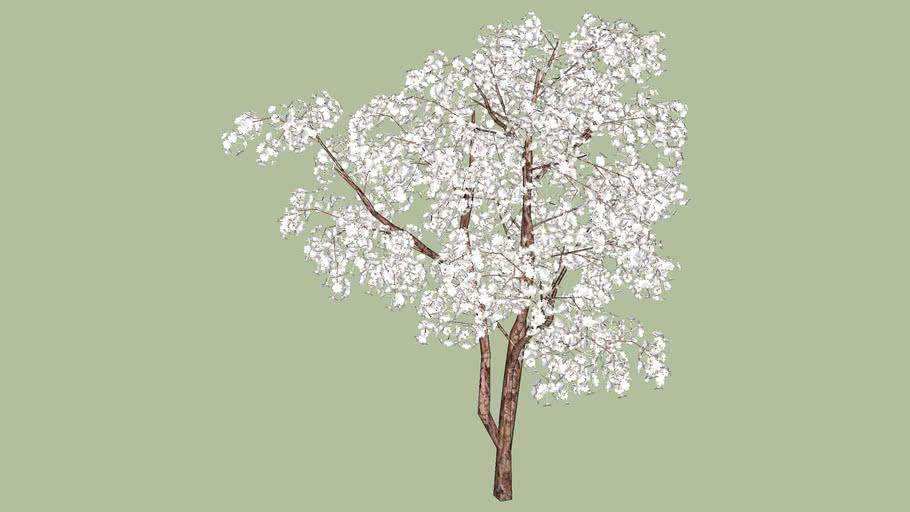 Cherry Blossoms White 3d Warehouse