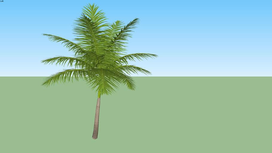 Palmeira 50