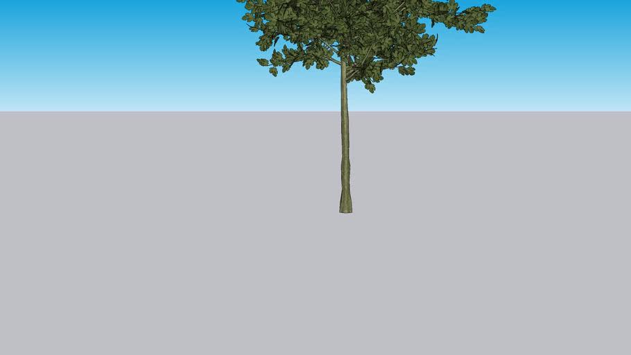 Oak Tree by International Treescapes, LLC