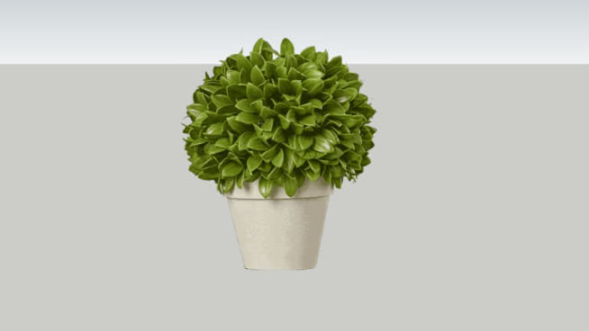 Potted Topiary Plant