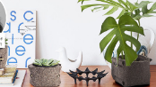 Plants / Decor