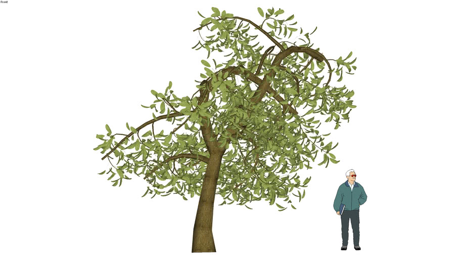 ODS - 3D Tree 16