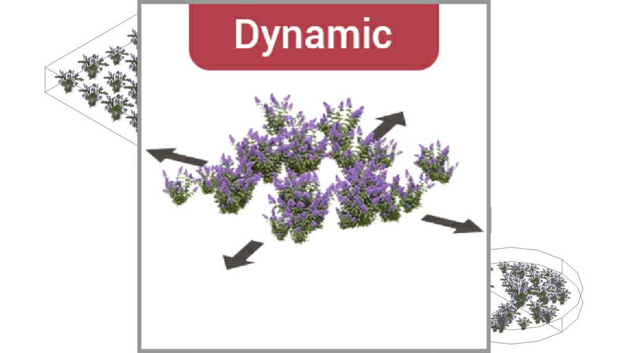 ROCKIT3D | Buddleja davidii 0.5 m purple (Summer lilac) dynamic