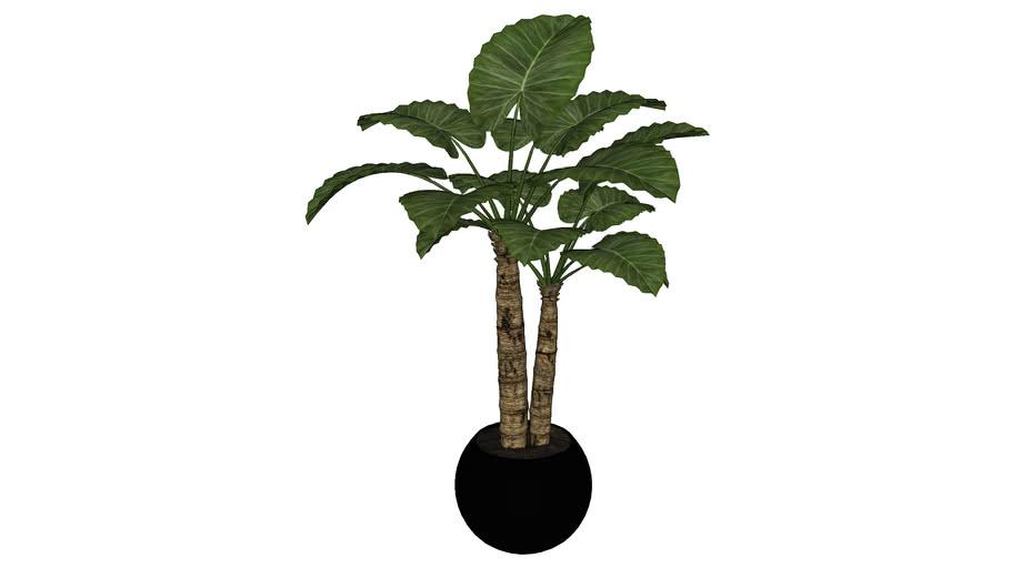 Plant in Pot CG 15