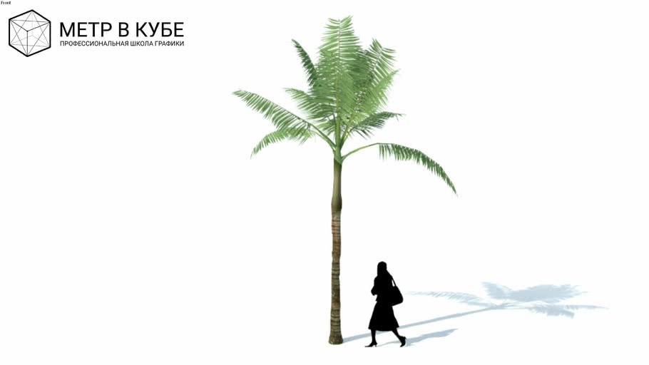 Low poly 3d tree palm (070)