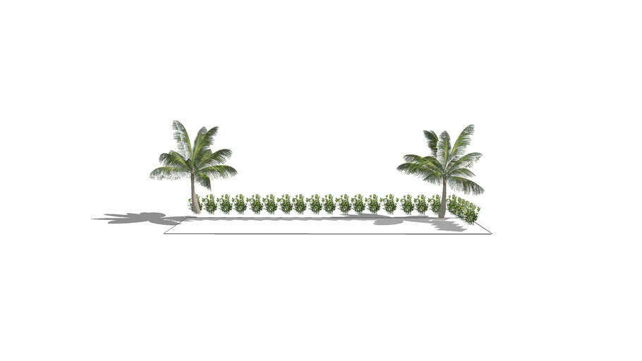 CLUSIA HEDGE WITH COCO PALMS