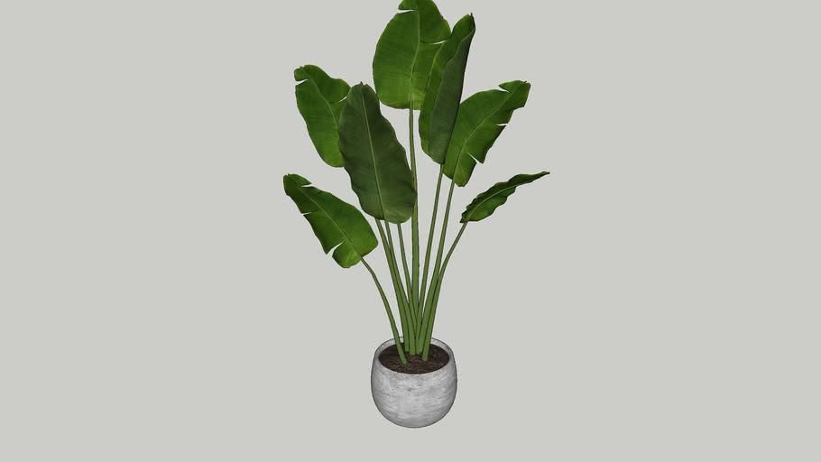 Vegetation 16