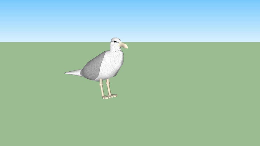 ARGO seagull sitting