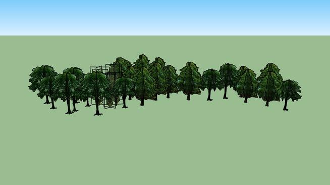 Drzewa Olsztyn 193