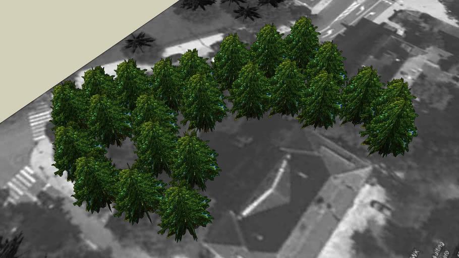 Drzewa Olsztyn 22