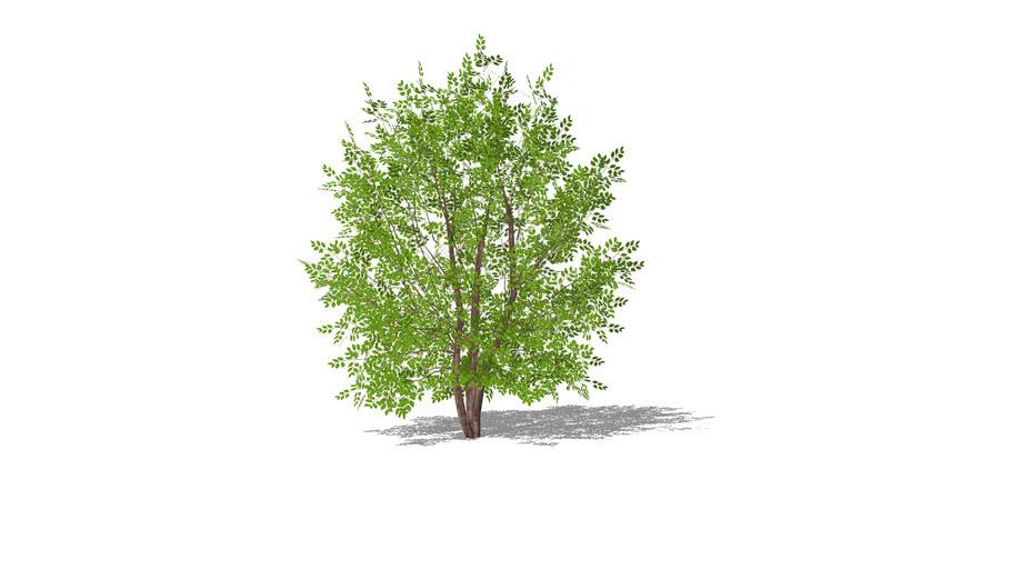 TREE P